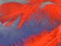 Ferner-Regen-Engel-05